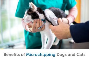 Top 5 reasons you should microchip your pet