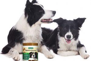 [New Product] NaturVet Digestive Enzymes Plus Probiotic Soft Chews