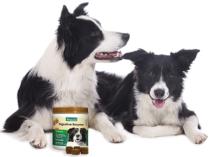 NaturVet Digestive Enzymes Plus Probiotic Soft Chews for Dogs