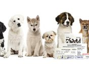[New Product] Viaguard DNAffirm Canine DNA Testing Kit