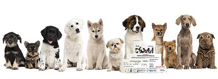 Viaguard DNAffirm Canine DNA Testing Kit