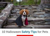 Ways to celebrate Halloween with your pet
