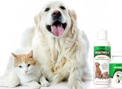 [New Product] Nutramax Welactin Omega 3 Canine and Feline