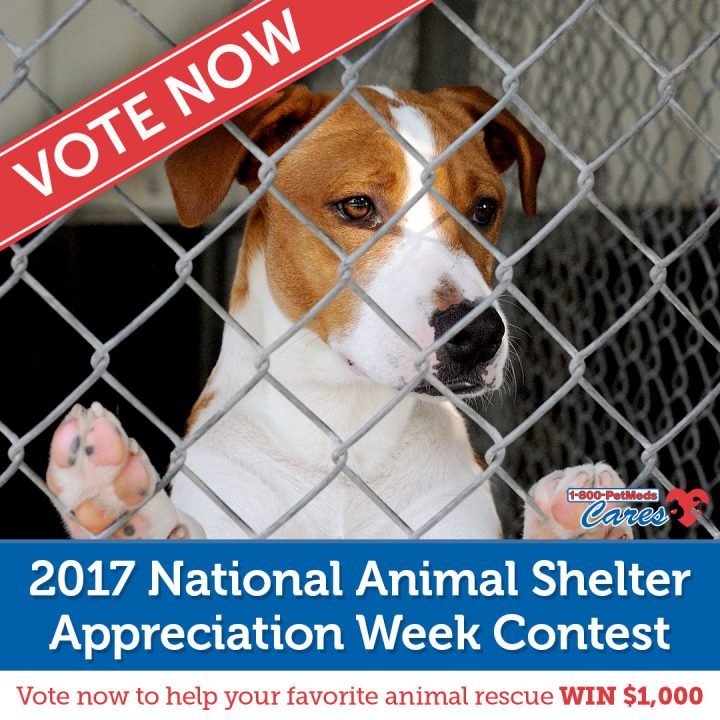 [Contest] Vote NOW to help an animal shelter!