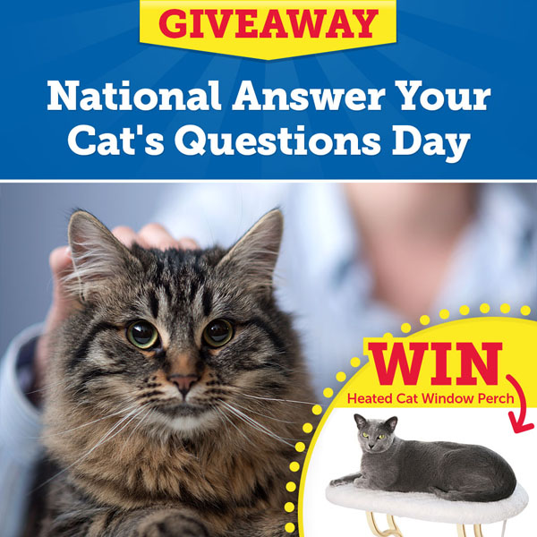 Enter the National Answer Your Cat's Questions Day Giveaway!
