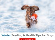 Should you feed your dog more in the winter?