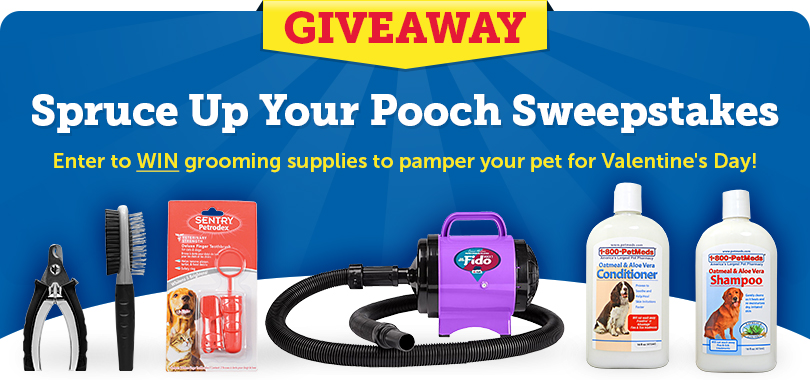 Enter the Spruce Up Your Pooch Sweepstakes!