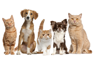 How Do Pets Get Diabetes? Diabetes Prevention Tips For Cats And Dogs