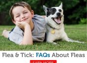 What's the single most important factor in flea survival? Learn this and more in our Flea FAQs