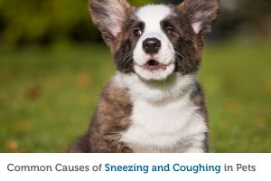 Achoo! The most likely reasons for your pet's sneezing or coughing