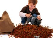 How Often Should I Feed my Pet?
