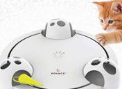 Uncover your Cat's Hunting Capabilities with this Toy