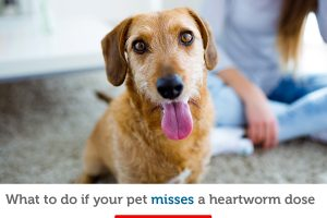 Forgot your pet's monthly heartworm dose?  Here's what to do next