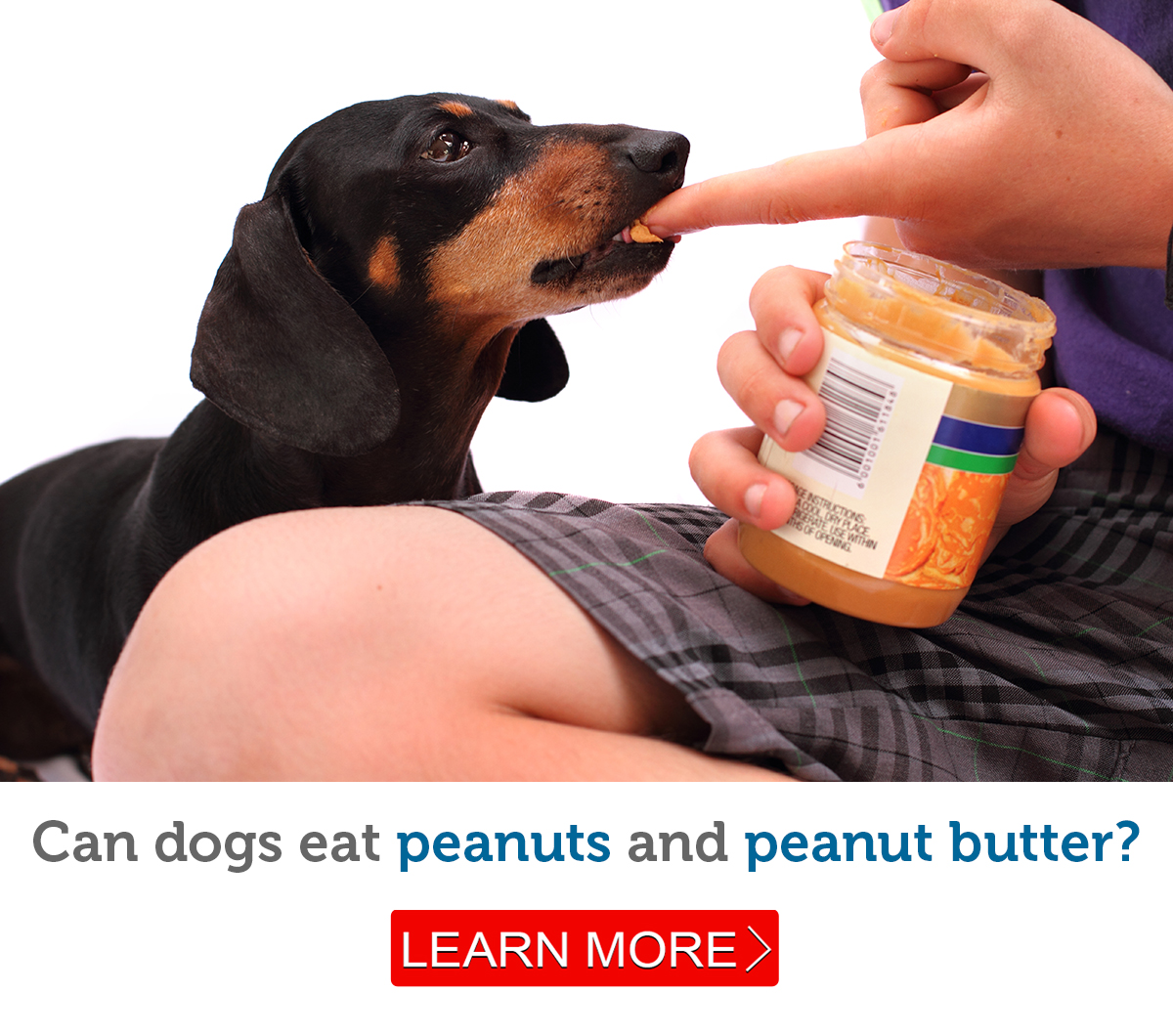 Can Dogs Eat Peanuts Safely