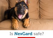 Is NexGard safe for your dog?