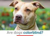 How your dog sees the world: are dogs colorblind?
