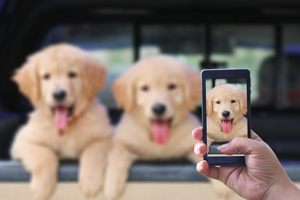 [Giveaway] Create the Perfect Memory with your Beloved Pet