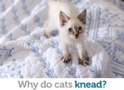 """Your biscuits are ready!"" Here's why cats knead"