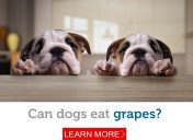 Off the menu: Why you should never let your dog eat grapes