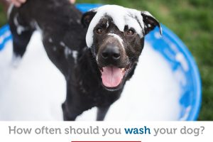 How often to wash your dog: Bathing guidelines