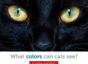 Through a cat's eyes: here's how a cat sees the world