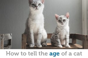 They're not telling! How to determine the age of a cat