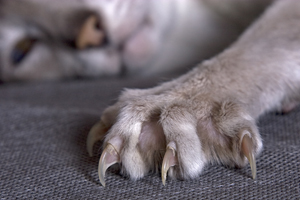 How to Safely Trim your Pet's Nails