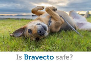 Bravecto is an effective treatment for fleas and ticks, but is it safe for your pet?