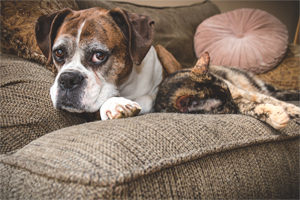 How to help out your senior pet