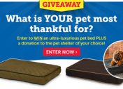 [Enter to win] Thankful Pet Sweepstakes
