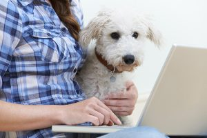 A woman holds her little dog while typing on a laptop computer