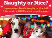[Enter to win] Naughty or Nice Sweepstakes