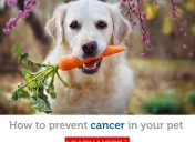 Pet cancer prevention: Serve these powerful cancer-fighting foods