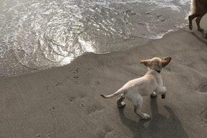 Leo Loves the Beach