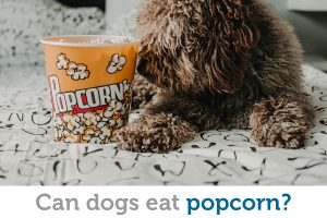 Can dogs eat popcorn? The better question is, should they?