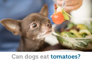 Is it safe for dogs to eat tomatoes?