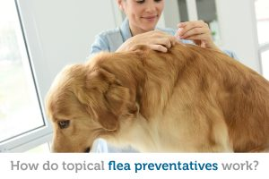Ever wonder how applying a flea treatment in one spot treats your pet's entire body?