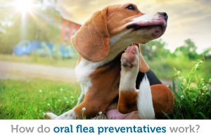 Is it time for your pet to make the switch to an oral flea treatment?