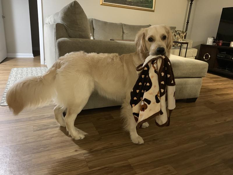Leo's Birthday - PetMeds® Pet Health Blog