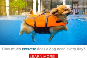 Do you know how much daily exercise your dog needs?