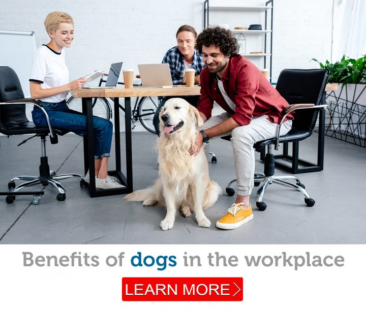 A friendly Golden Retriever in the workplace with three employees at a table.