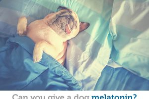 Is melatonin safe for dogs? What are the benefits?