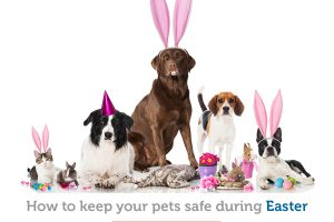 Keep your pet safe from these top 3 Easter dangers