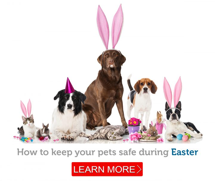 An adorable group of pets wearing their Easter finest