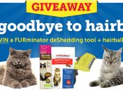 Hairball Awareness Day Sweepstakes