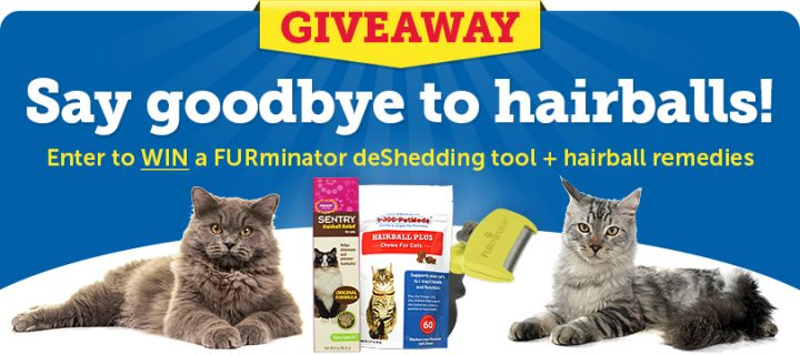 Two fluffy cats next to Sweepstakes prizes