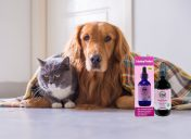 [NEW PRODUCT] How to help keep your pet calm this summer