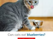 Are blueberries safe for cats to eat?