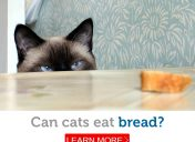 Going against the grain: can cats eat bread?