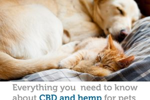 The benefits of CBD and hemp for pets